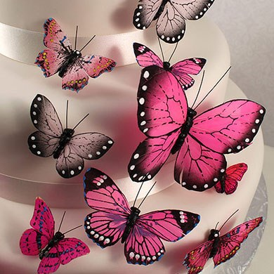Beautiful Butterfly Cake Sets, Butterfly Wedding Favours ...