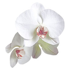 Classic Orchid Die-cut Sticker