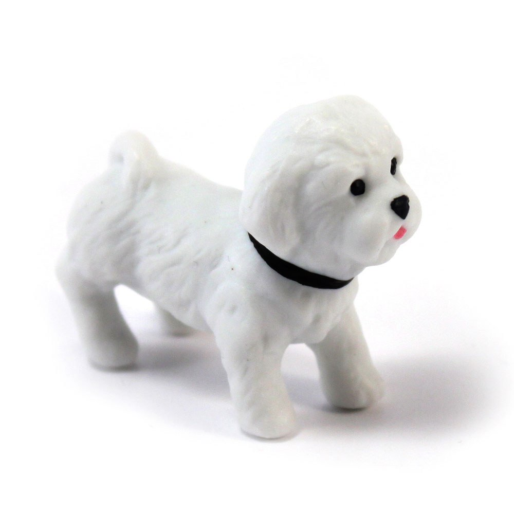 Miniature Bichon Frise Dog